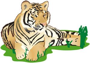 24-Tigre